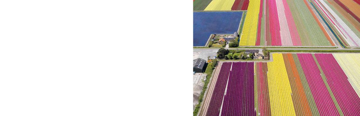 Alison Brooks Architects _ Rainham _ Wildspace Warehouse _ Tulip Field